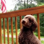 Henry the dog on front porch of Cottage