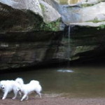 Dog in the Hocking Hills